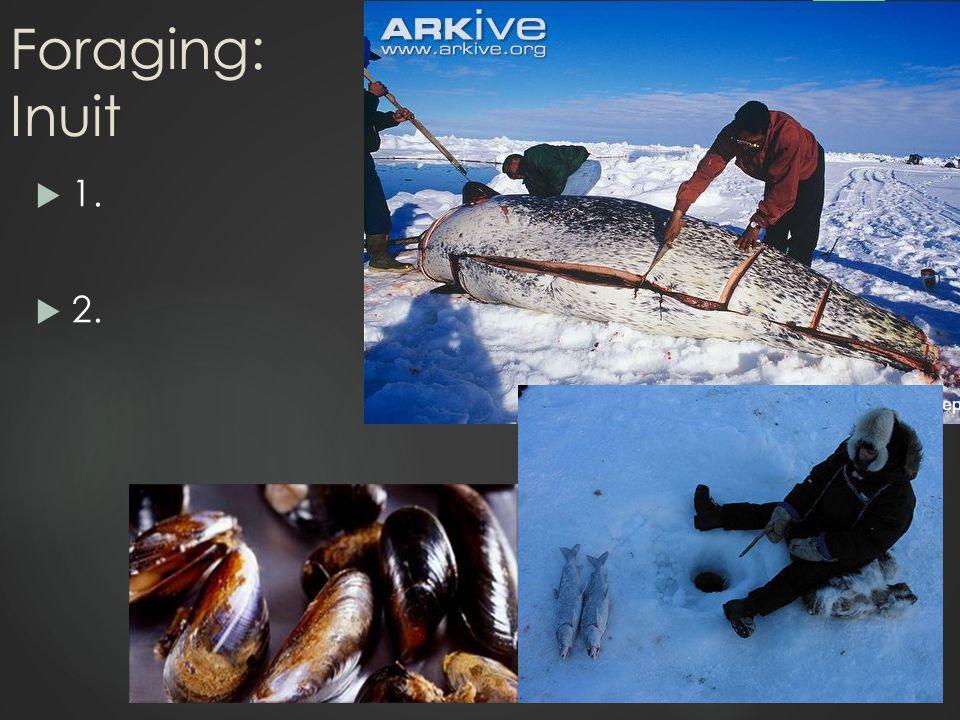 Foraging: Inuit  1.  2.