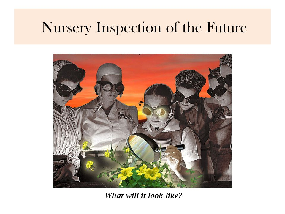 Nursery Inspection of the Future What will it look like?