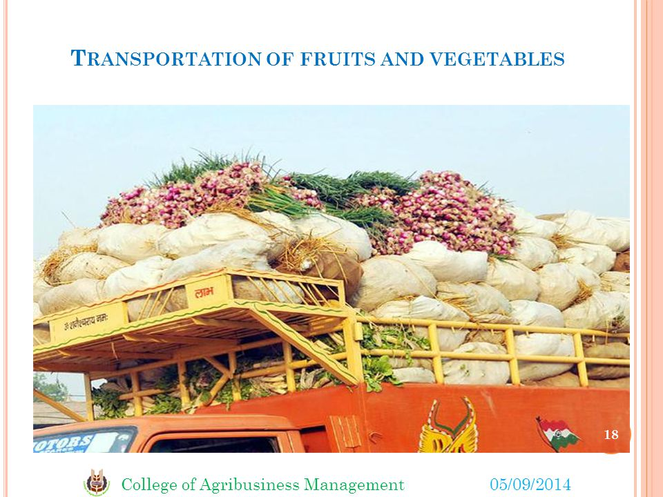 College of Agribusiness Management05/09/2014 T RANSPORTATION OF FRUITS AND VEGETABLES 18