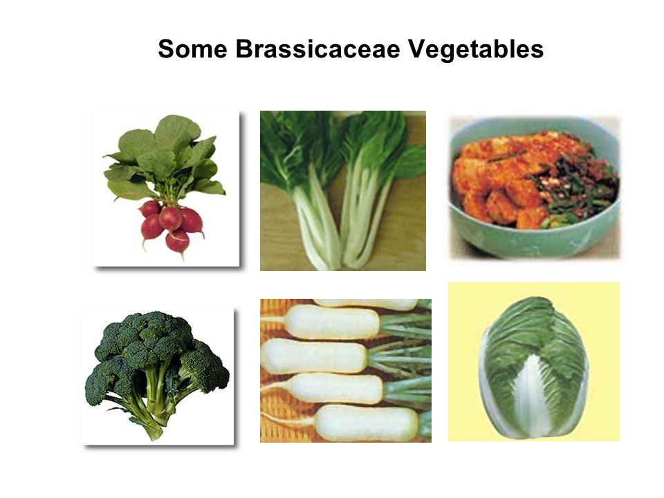 Some Brassicaceae Vegetables