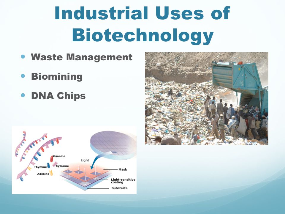 Industrial Uses of Biotechnology Waste Management Biomining DNA Chips