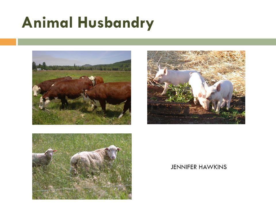 JENNIFER HAWKINS Animal Husbandry
