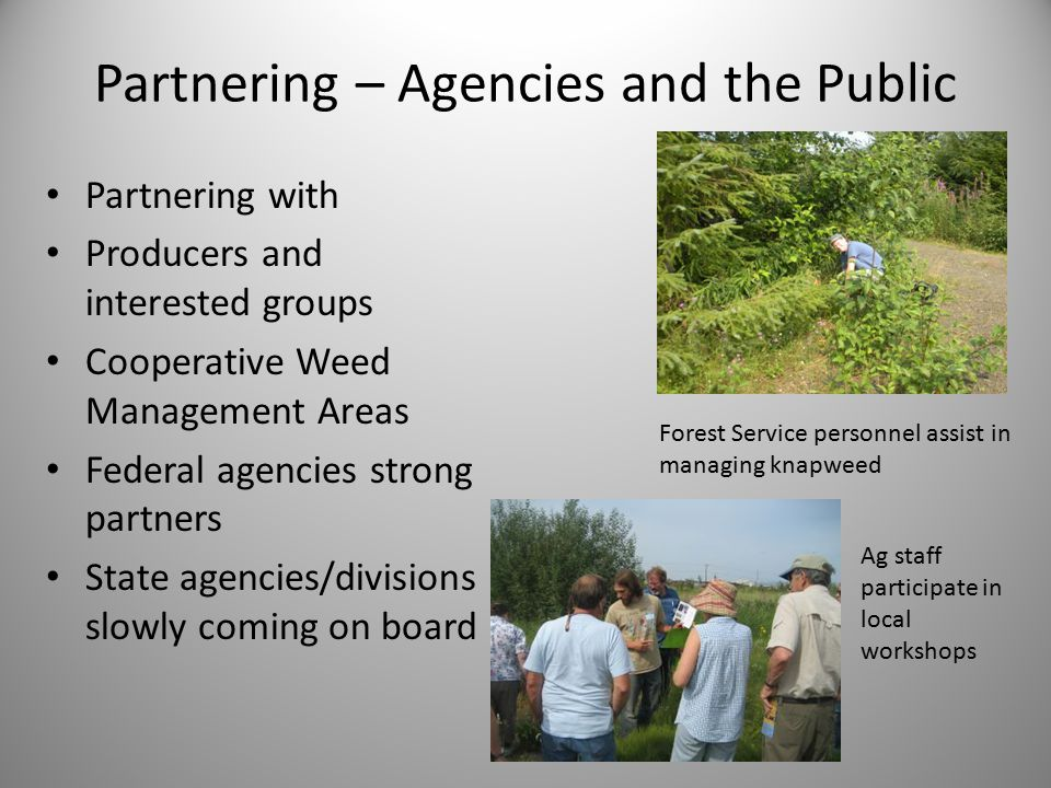 Partnering – Agencies and the Public Partnering with Producers and interested groups Cooperative Weed Management Areas Federal agencies strong partners State agencies/divisions slowly coming on board Forest Service personnel assist in managing knapweed Ag staff participate in local workshops