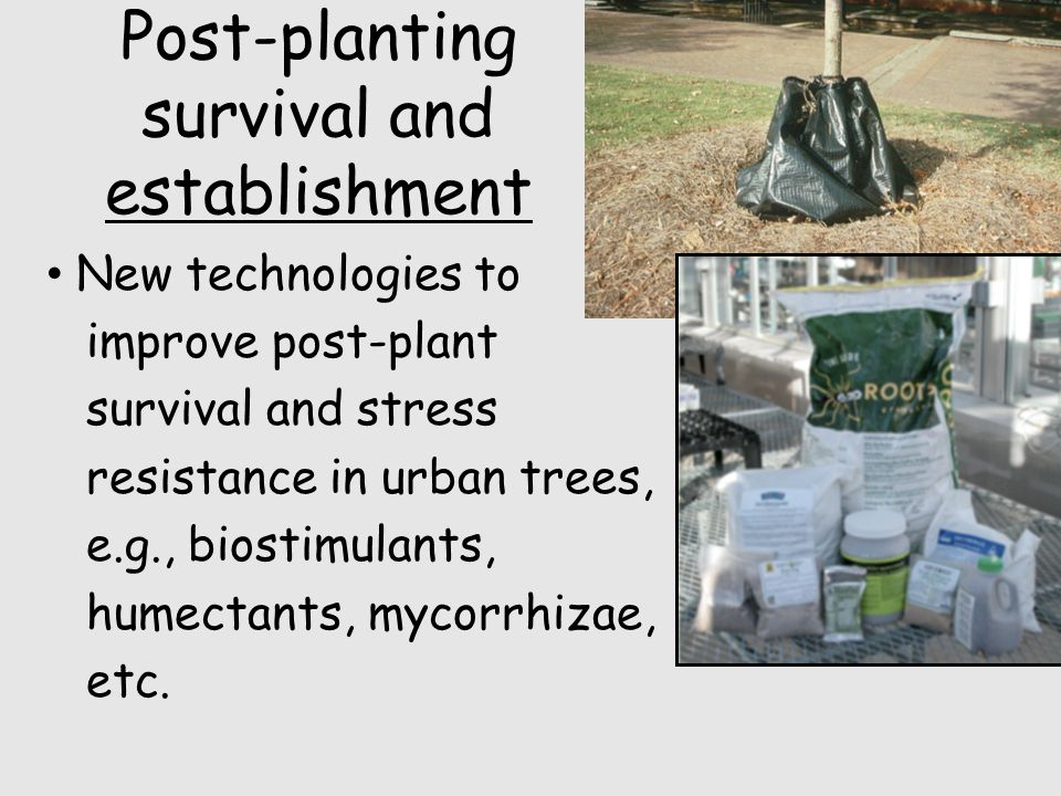 Post-planting survival and establishment New technologies to improve post-plant survival and stress resistance in urban trees, e.g., biostimulants, humectants, mycorrhizae, etc.