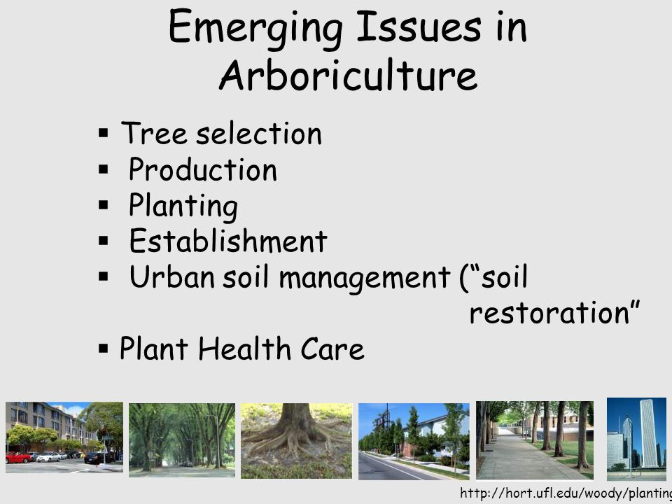 http://hort.ufl.edu/woody/planting Emerging Issues in Arboriculture  Tree selection  Production  Planting  Establishment  Urban soil management ( soil restoration  Plant Health Care