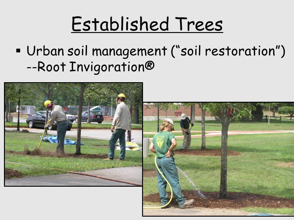 Established Trees  Urban soil management ( soil restoration ) --Root Invigoration®