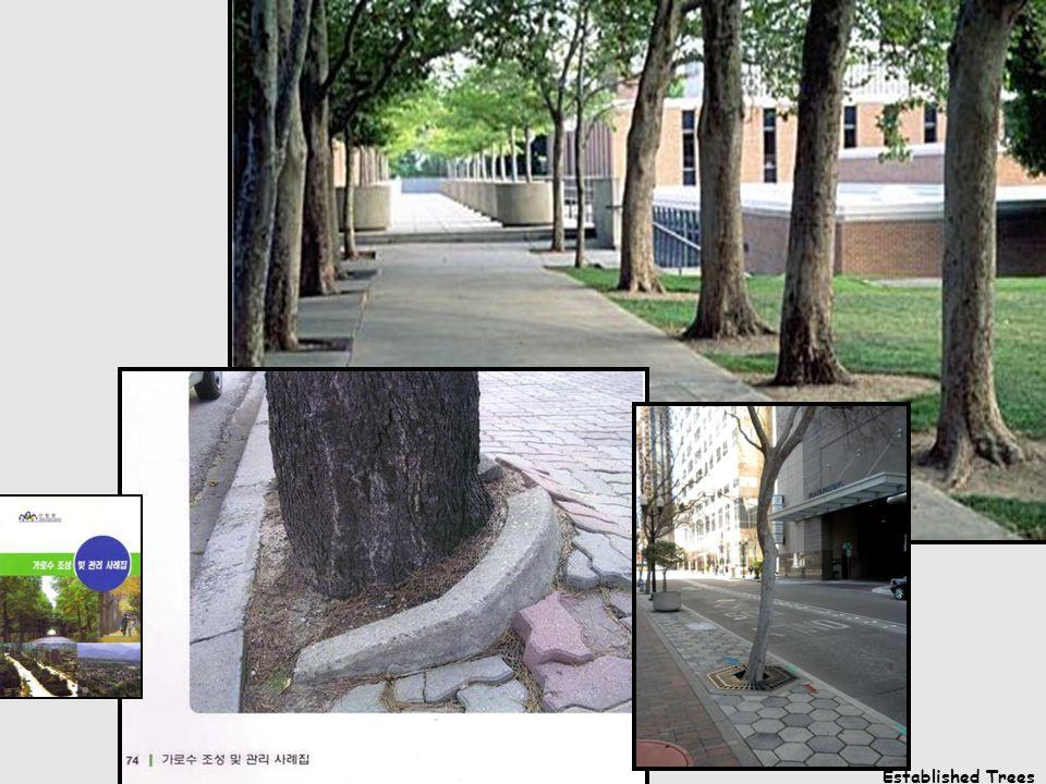Established Trees