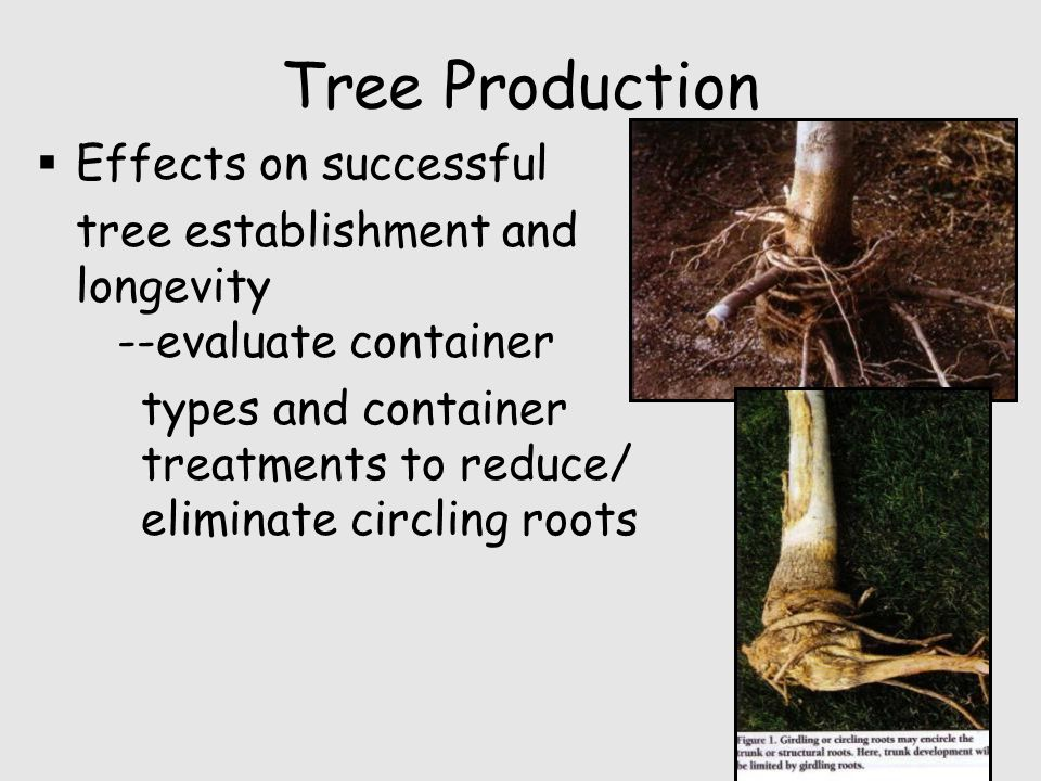 Tree Production  Effects on successful tree establishment and longevity --evaluate container types and container treatments to reduce/ eliminate circling roots
