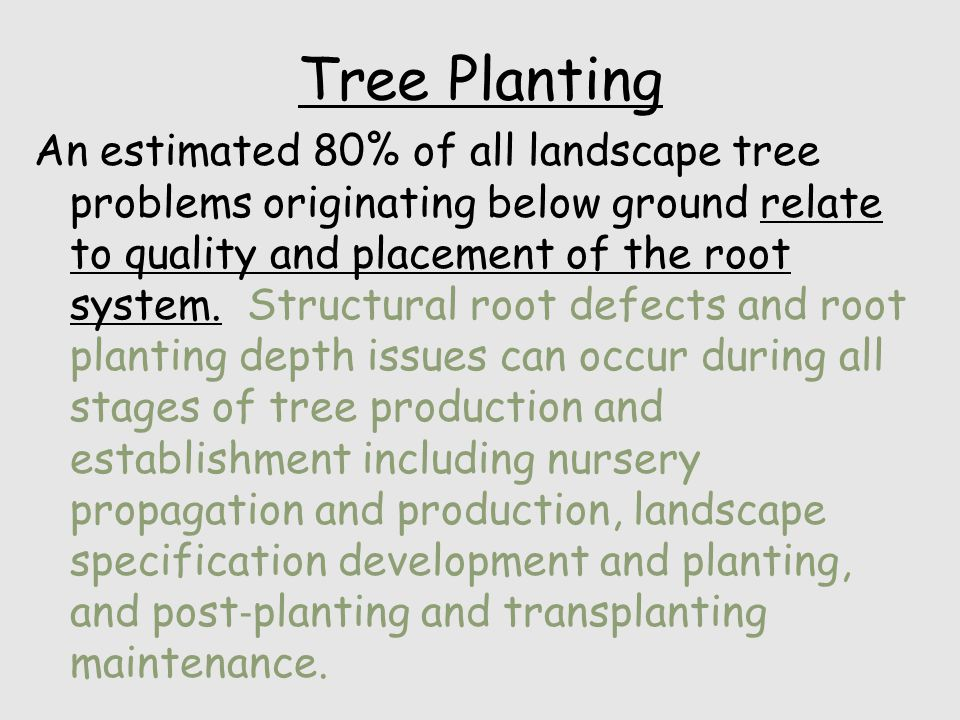 Planting and establishment An estimated 80 percent of all landscape tree problems originating below ground relate to quality and placement of the root system.