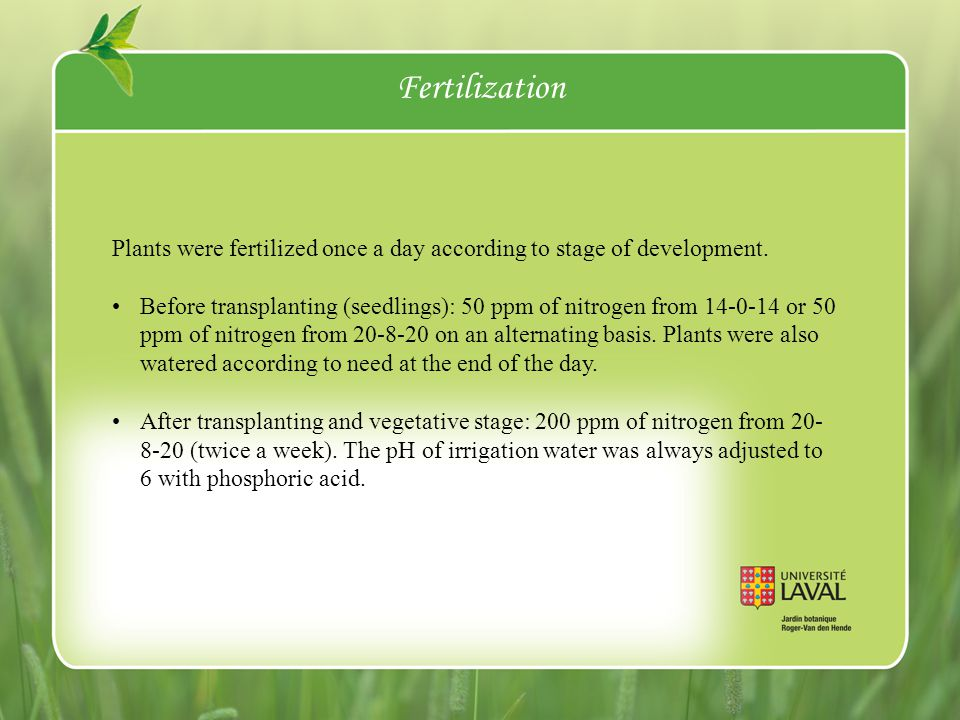 Fertilization Plants were fertilized once a day according to stage of development.