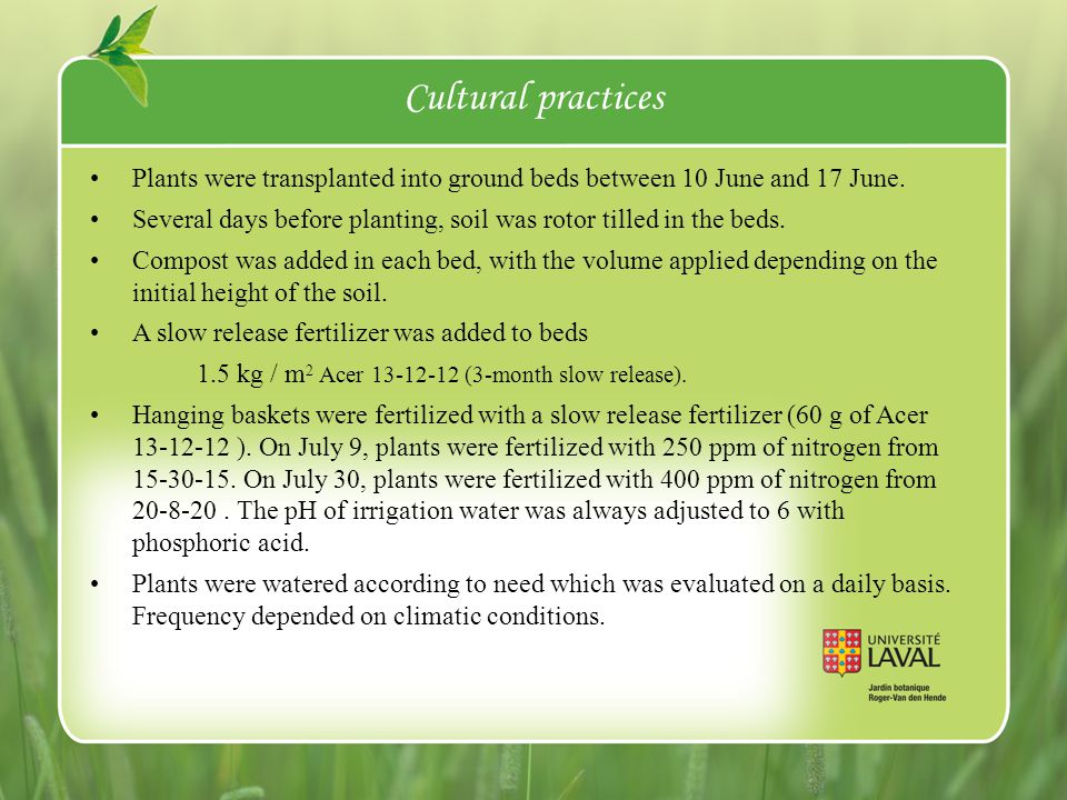 Performance of cultivars Cultivars were evaluated on a scale of 1 to 5.