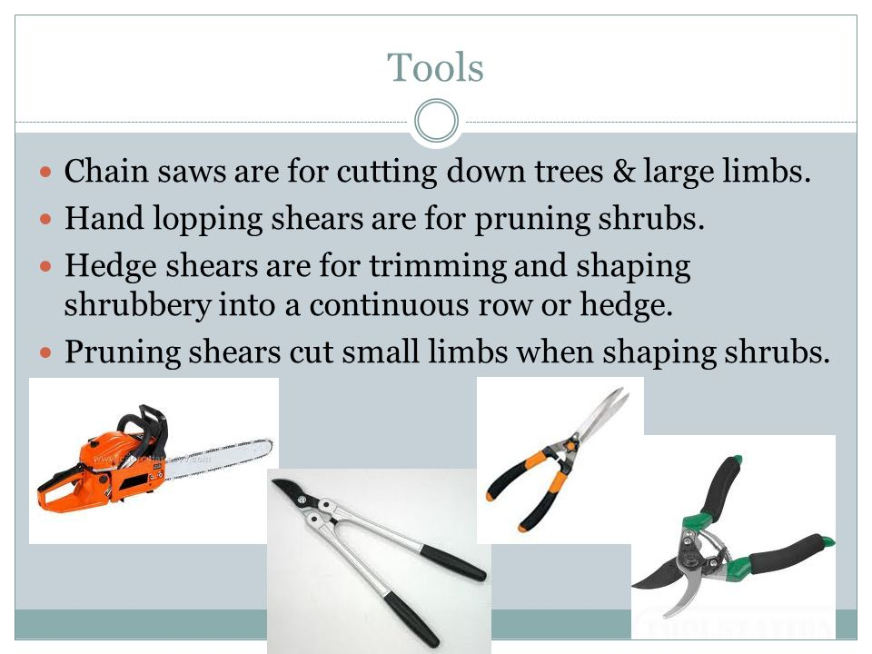 Tools Chain saws are for cutting down trees & large limbs.
