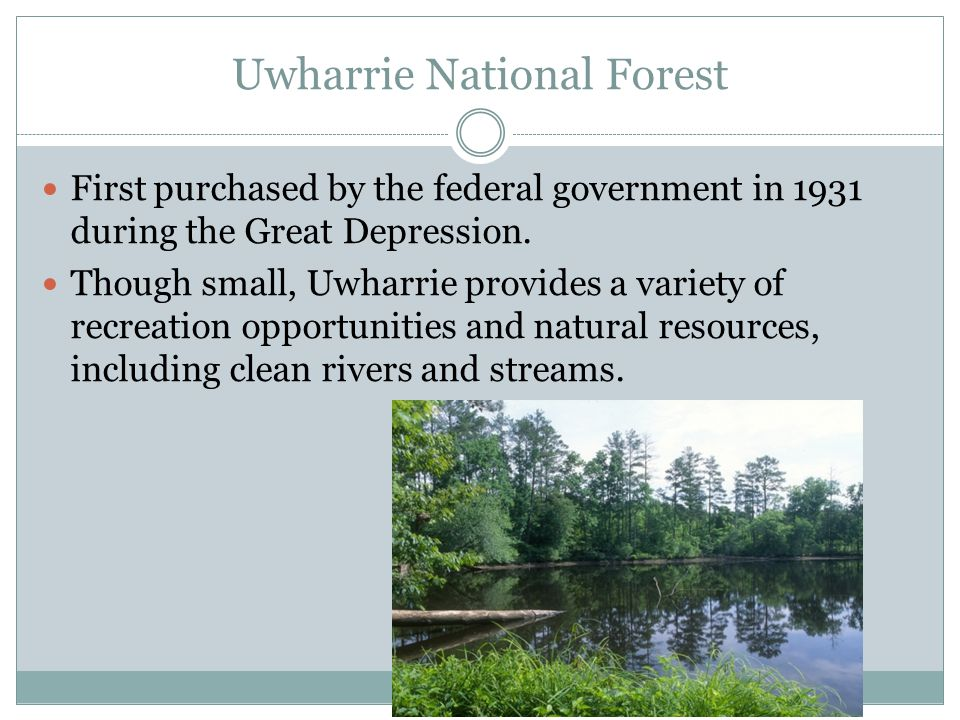 Uwharrie National Forest First purchased by the federal government in 1931 during the Great Depression.