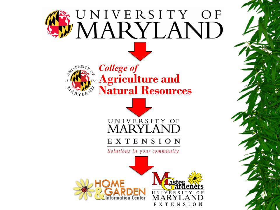 WHAT DO MASTER GARDENERS DO? DEVELOP AND RUN EDUCATIONAL PROGRAMS AND PROJECTS!