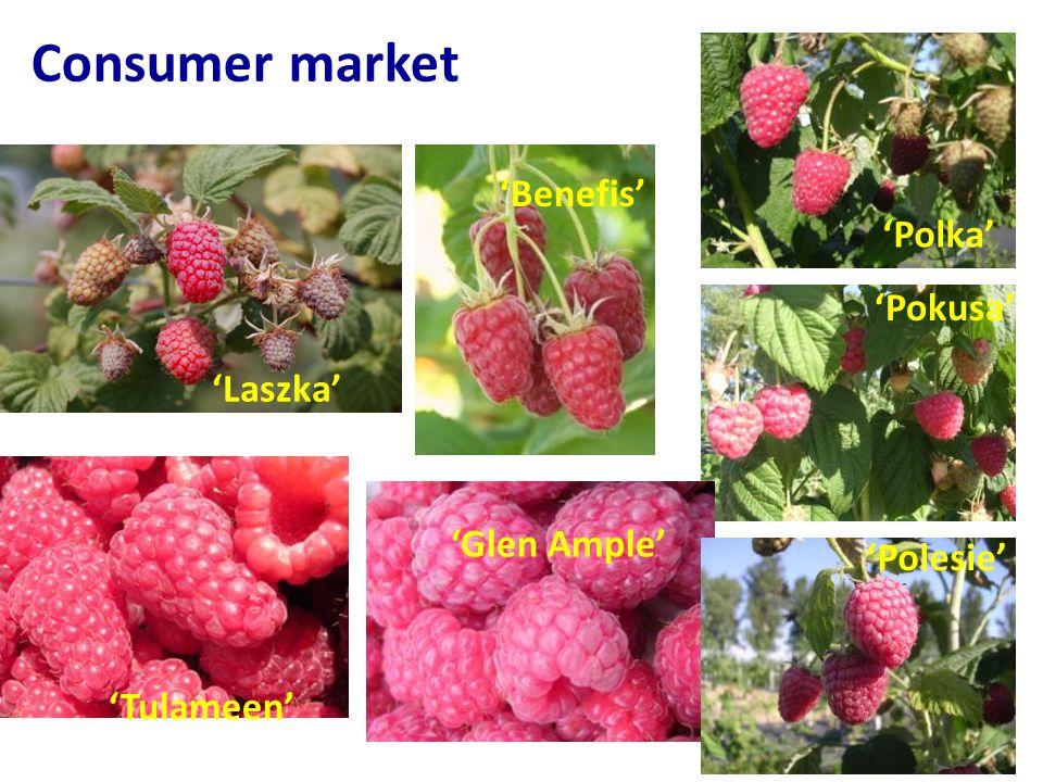 Consumer market 'Polesie' 'Pokusa' 'Polka' 'Glen Ample' 'Tulameen' 'Laszka' 'Benefis'