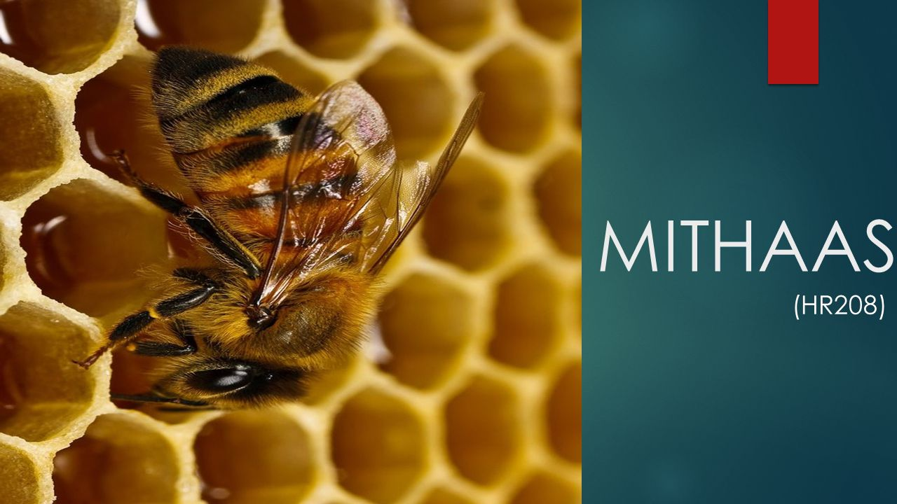 MITHAAS (HR208)