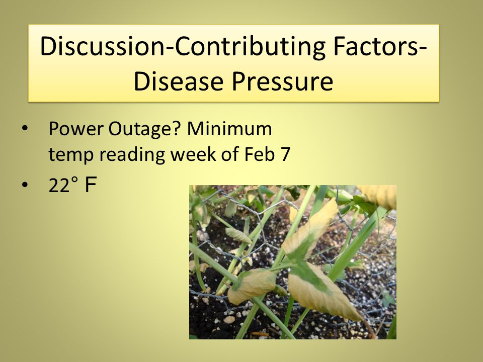 Discussion-Contributing Factors- Disease Pressure Power Outage.