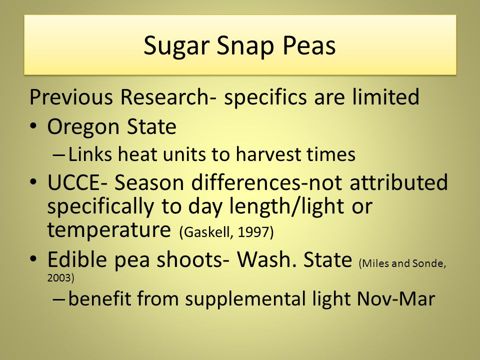 Sugar Snap Peas Previous Research- specifics are limited Oregon State – Links heat units to harvest times UCCE- Season differences-not attributed specifically to day length/light or temperature (Gaskell, 1997) Edible pea shoots- Wash.