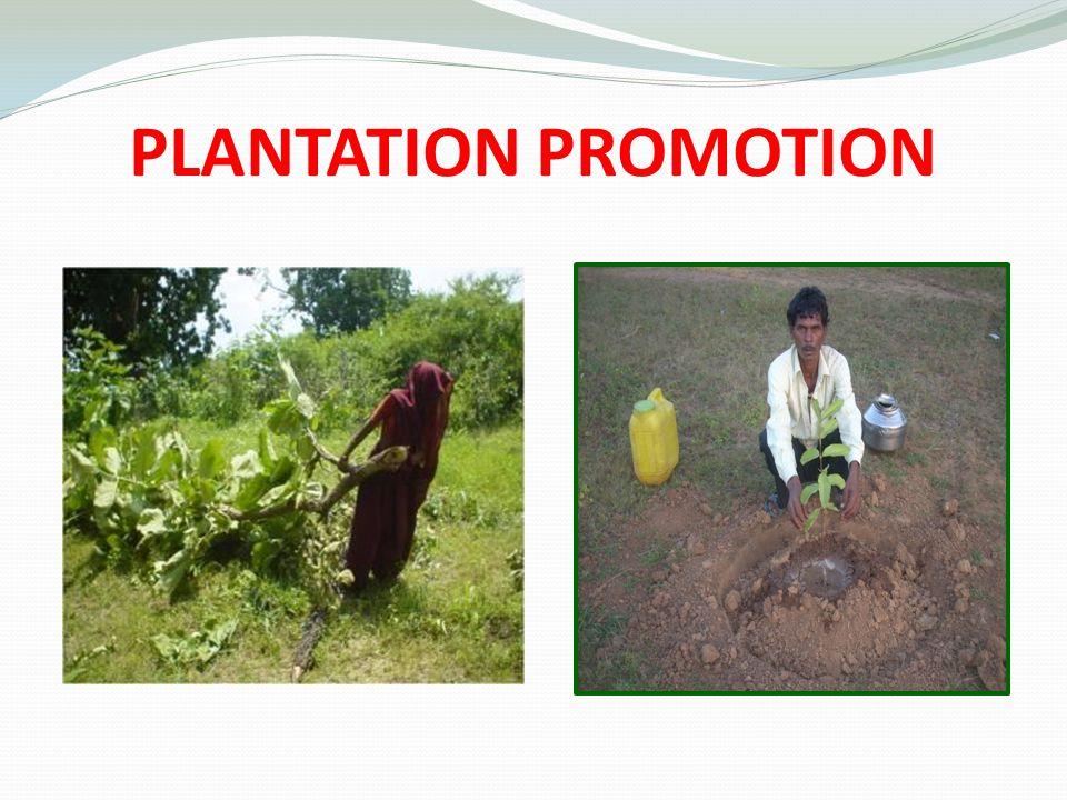 PLANTATION PROMOTION
