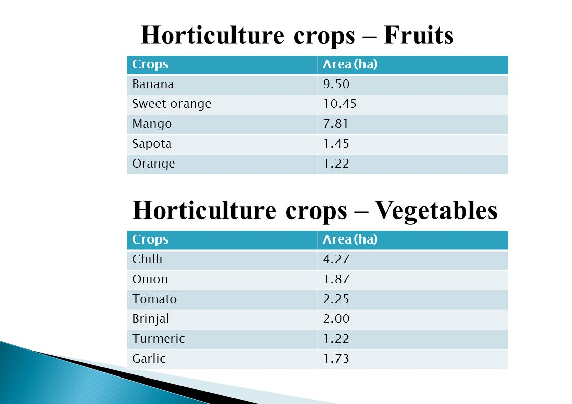 Horticulture crops – Fruits Horticulture crops – Vegetables CropsArea (ha) Banana9.50 Sweet orange10.45 Mango7.81 Sapota1.45 Orange1.22 CropsArea (ha) Chilli4.27 Onion1.87 Tomato2.25 Brinjal2.00 Turmeric1.22 Garlic1.73