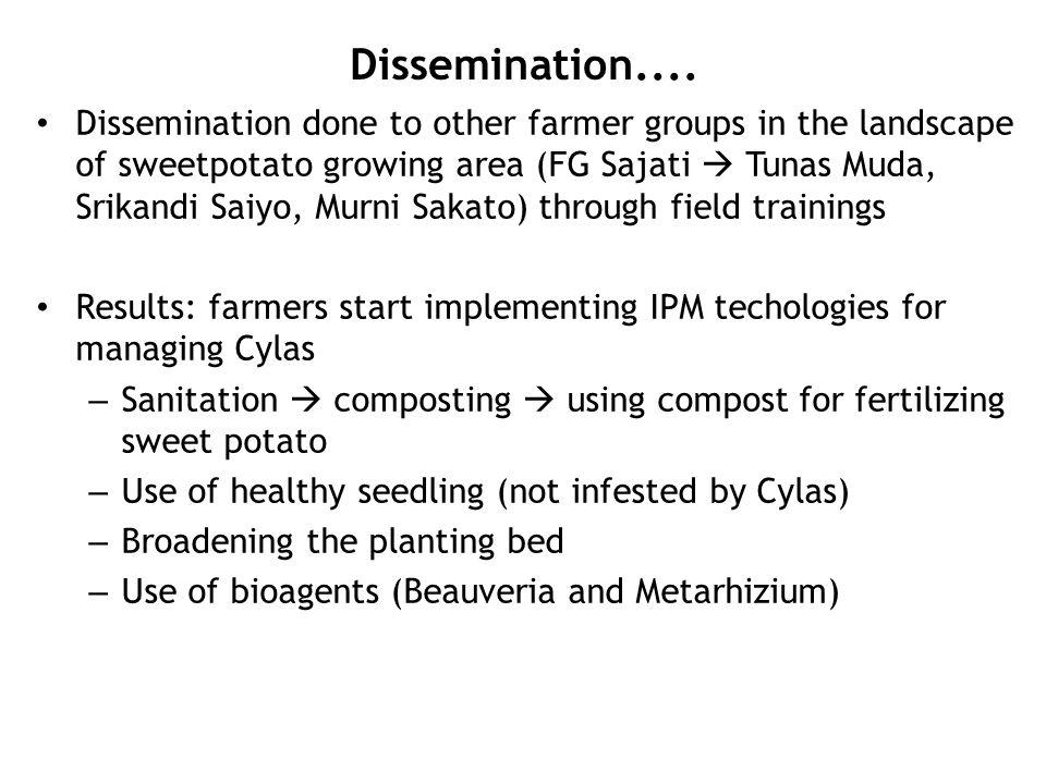 Dissemination.... Dissemination done to other farmer groups in the landscape of sweetpotato growing area (FG Sajati  Tunas Muda, Srikandi Saiyo, Murn