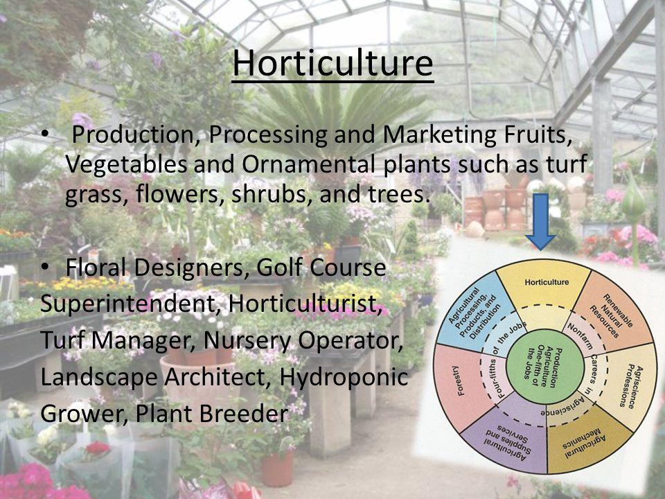Horticulture Production, Processing and Marketing Fruits, Vegetables and Ornamental plants such as turf grass, flowers, shrubs, and trees. Floral Desi
