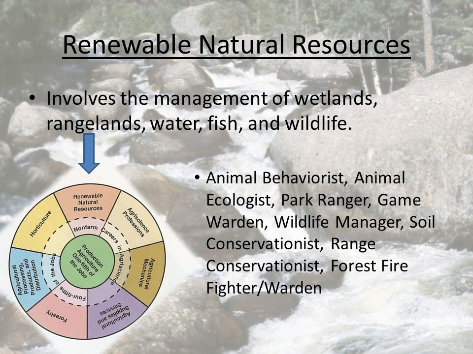 Renewable Natural Resources Involves the management of wetlands, rangelands, water, fish, and wildlife. Animal Behaviorist, Animal Ecologist, Park Ran