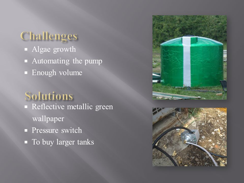  Algae growth  Automating the pump  Enough volume  Reflective metallic green wallpaper  Pressure switch  To buy larger tanks