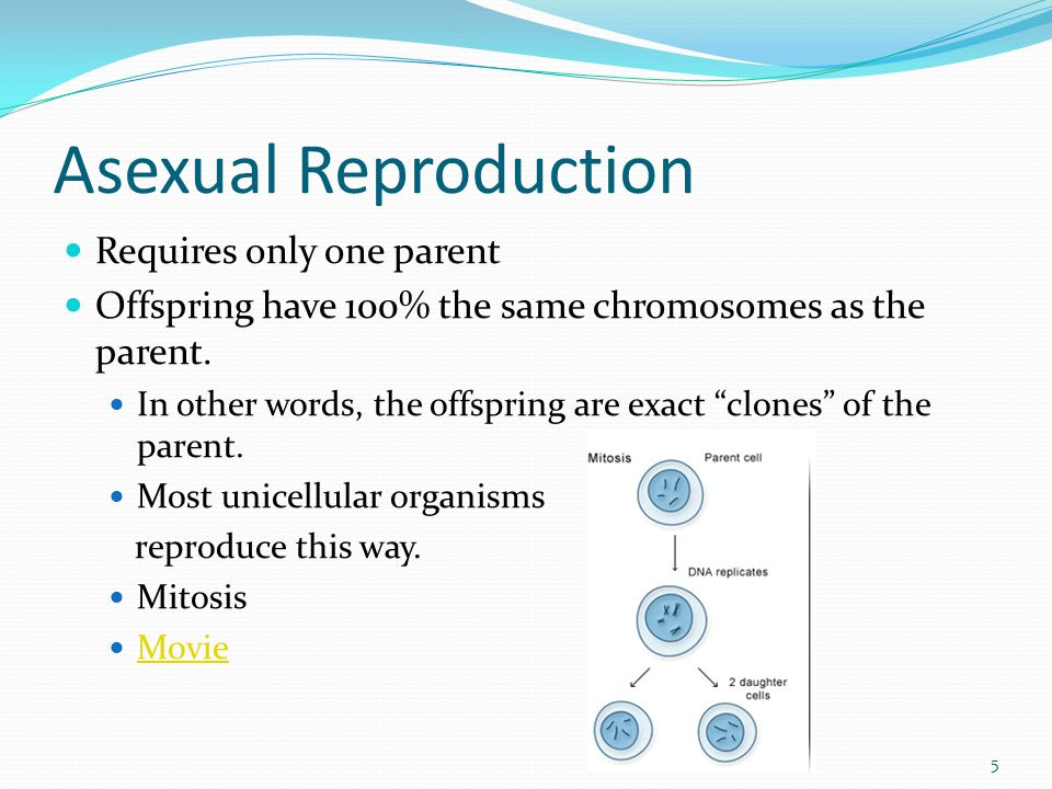 "Asexual Reproduction Requires only one parent Offspring have 100% the same chromosomes as the parent. In other words, the offspring are exact ""clones"""