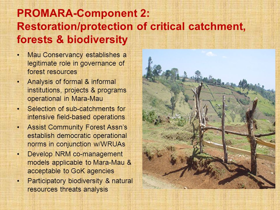 PROMARA-Component 2: Restoration/protection of critical catchment, forests & biodiversity Mau Conservancy establishes a legitimate role in governance of forest resources Analysis of formal & informal institutions, projects & programs operational in Mara-Mau Selection of sub-catchments for intensive field-based operations Assist Community Forest Assn's establish democratic operational norms in conjunction w/WRUAs Develop NRM co-management models applicable to Mara-Mau & acceptable to GoK agencies Participatory biodiversity & natural resources threats analysis