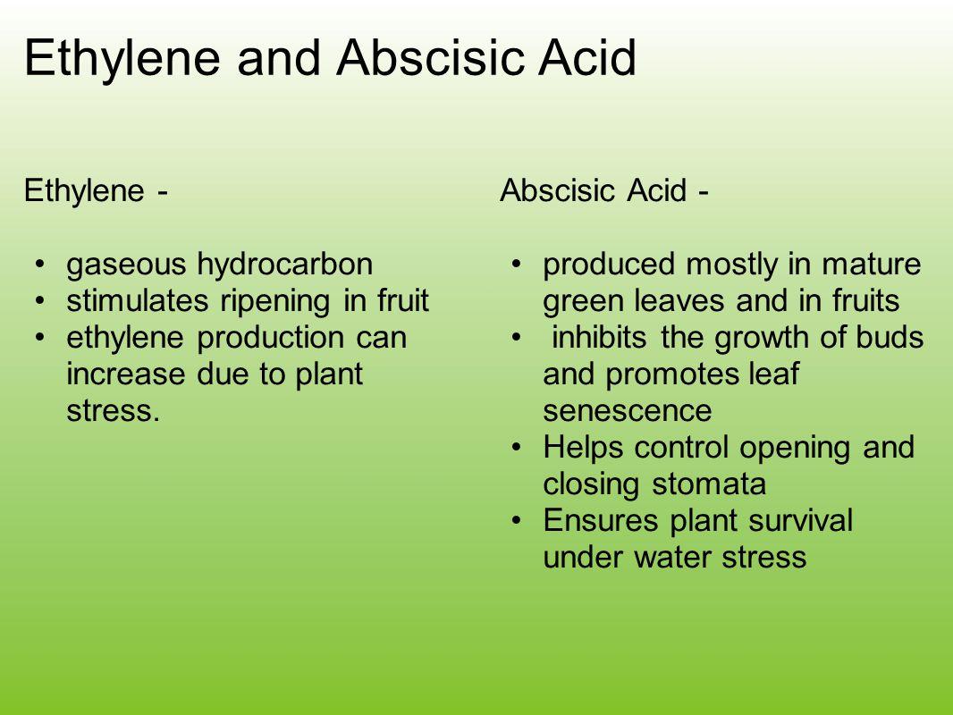 Ethylene and Abscisic Acid Ethylene - gaseous hydrocarbon stimulates ripening in fruit ethylene production can increase due to plant stress. Abscisic