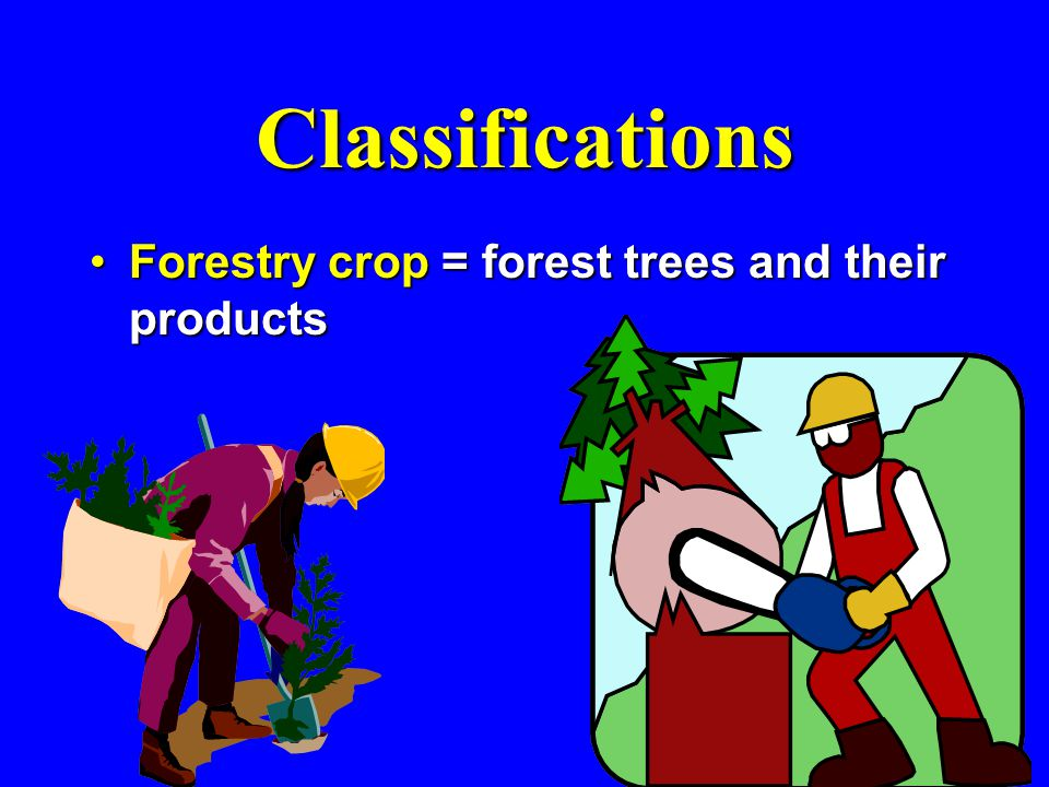 Classifications Forestry crop = forest trees and their productsForestry crop = forest trees and their products