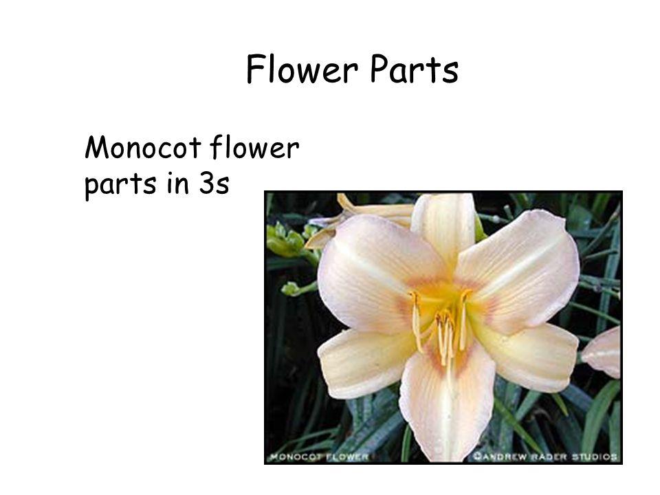 Flower Parts Monocot flower parts in 3s