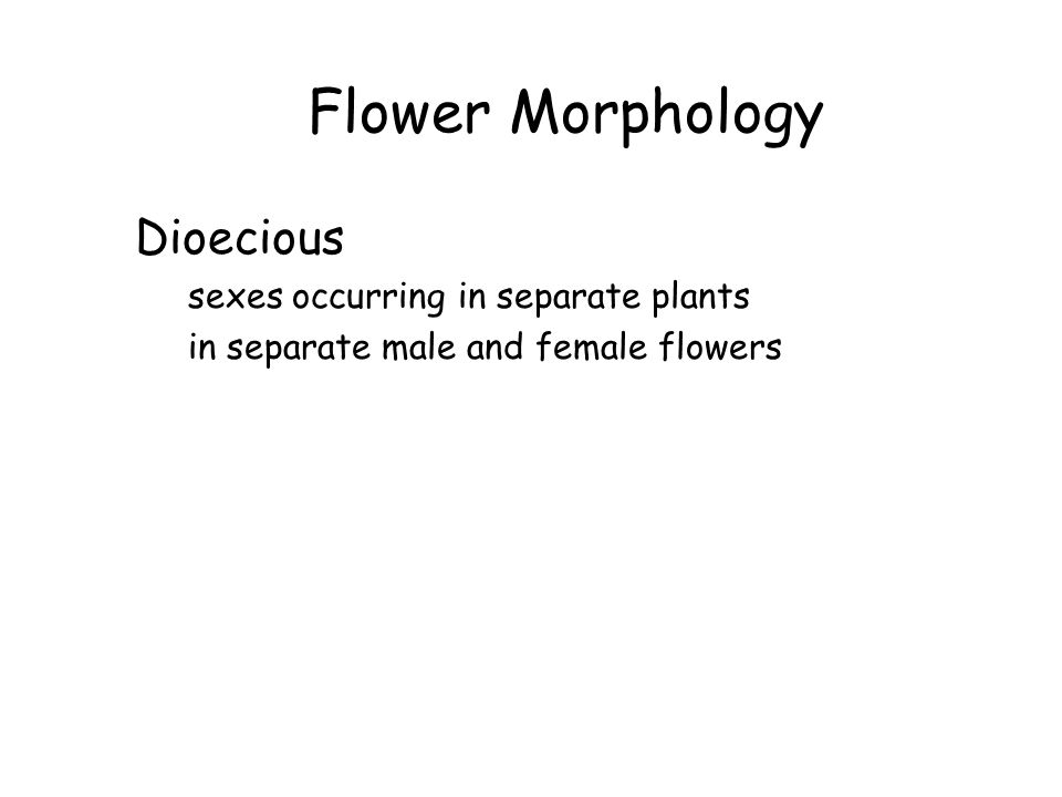 Flower Morphology Dioecious sexes occurring in separate plants in separate male and female flowers
