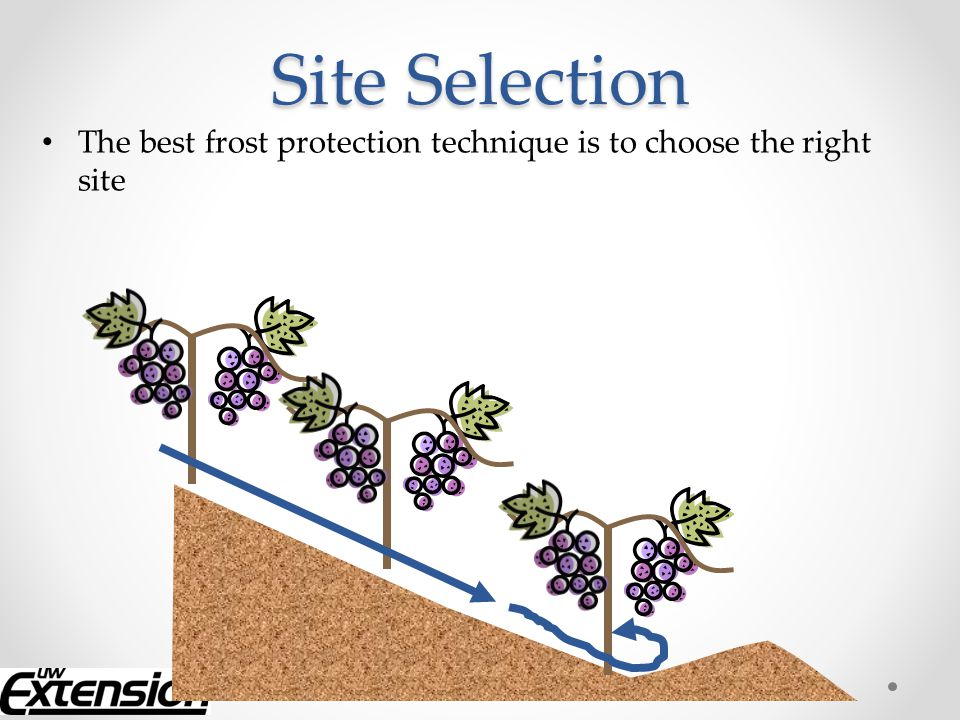 Summary Choose your site and design your vineyard wisely.