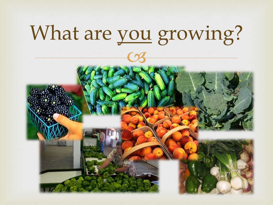  What are you growing?