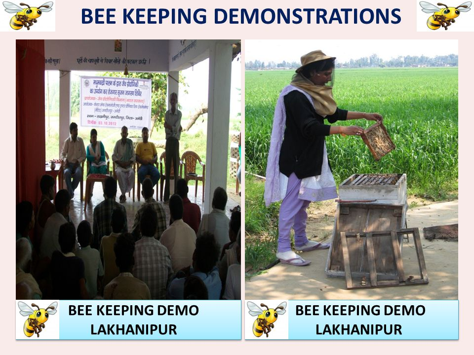 BEE KEEPING DEMONSTRATIONS BEE KEEPING DEMO LAKHANIPUR BEE KEEPING DEMO LAKHANIPUR BEE KEEPING DEMO LAKHANIPUR BEE KEEPING DEMO LAKHANIPUR