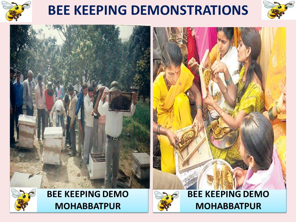BEE KEEPING DEMONSTRATIONS BEE KEEPING DEMO MOHABBATPUR BEE KEEPING DEMO MOHABBATPUR BEE KEEPING DEMO MOHABBATPUR BEE KEEPING DEMO MOHABBATPUR