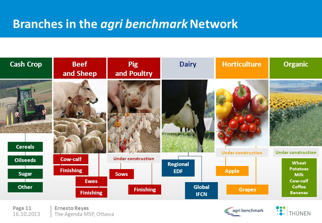 Ernesto Reyes Branches in the agri benchmark Network Page 11 HorticultureDairyCash CropBeef and Sheep Under construction Pig and Poultry Organic Under construction Cow-calf Ewes Finishing Under construction Cereals Oilseeds Sugar Other Sows Grapes Apple Wheat Potatoes Milk Cow-calf Coffee Bananas Finishing 16.10.2013The Agenda MSP, Ottawa Regional EDF Global IFCN