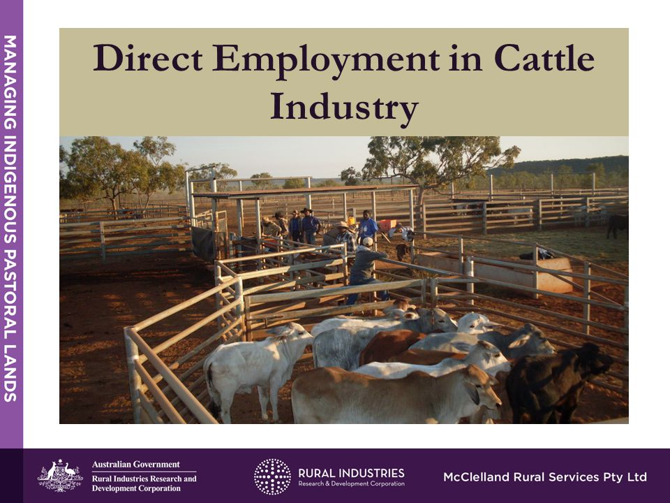 Direct Employment in Cattle Industry