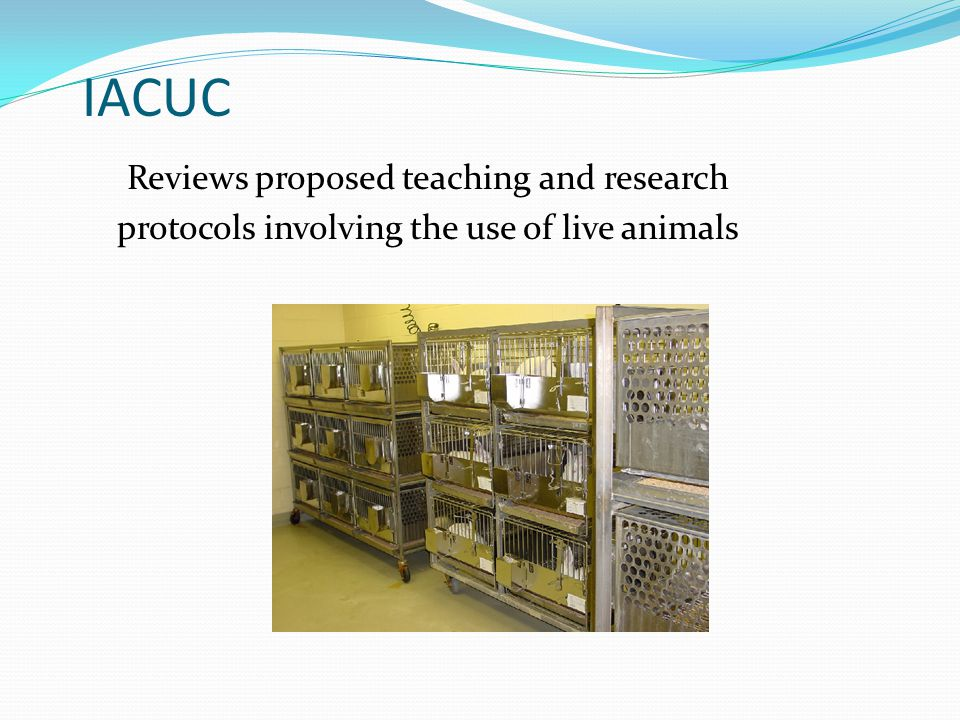 Reviews proposed teaching and research protocols involving the use of live animals IACUC