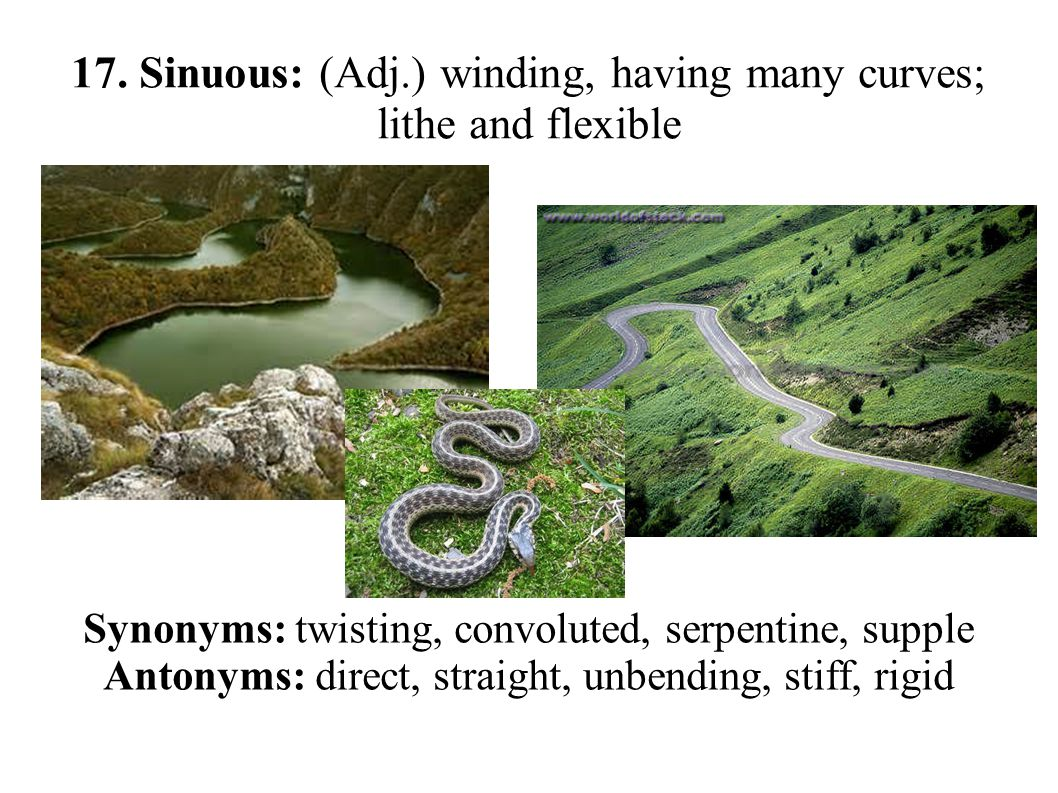 17. Sinuous: (Adj.) winding, having many curves; lithe and flexible Synonyms: twisting, convoluted, serpentine, supple Antonyms: direct, straight, unb