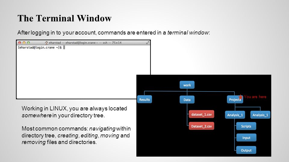 The Terminal Window After logging in to your account, commands are entered in a terminal window: Working in LINUX, you are always located somewhere in your directory tree.