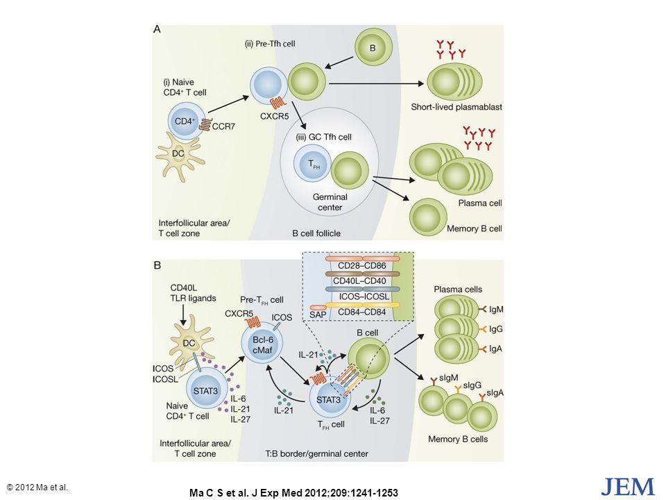 Ma C S et al. J Exp Med 2012;209:1241-1253 © 2012 Ma et al.