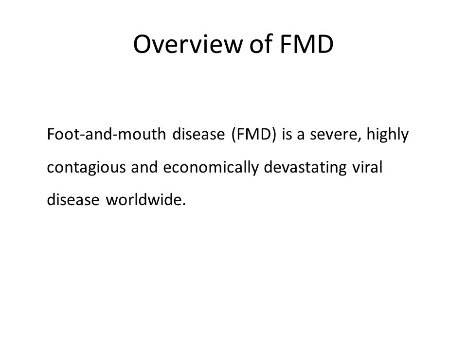 Overview of FMD Foot-and-mouth disease (FMD) is a severe, highly contagious and economically devastating viral disease worldwide.