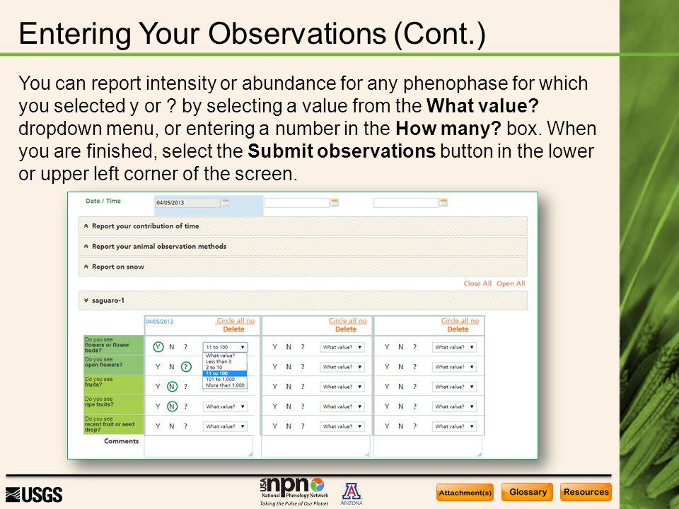Entering Your Observations (Cont.) You can report intensity or abundance for any phenophase for which you selected y or .