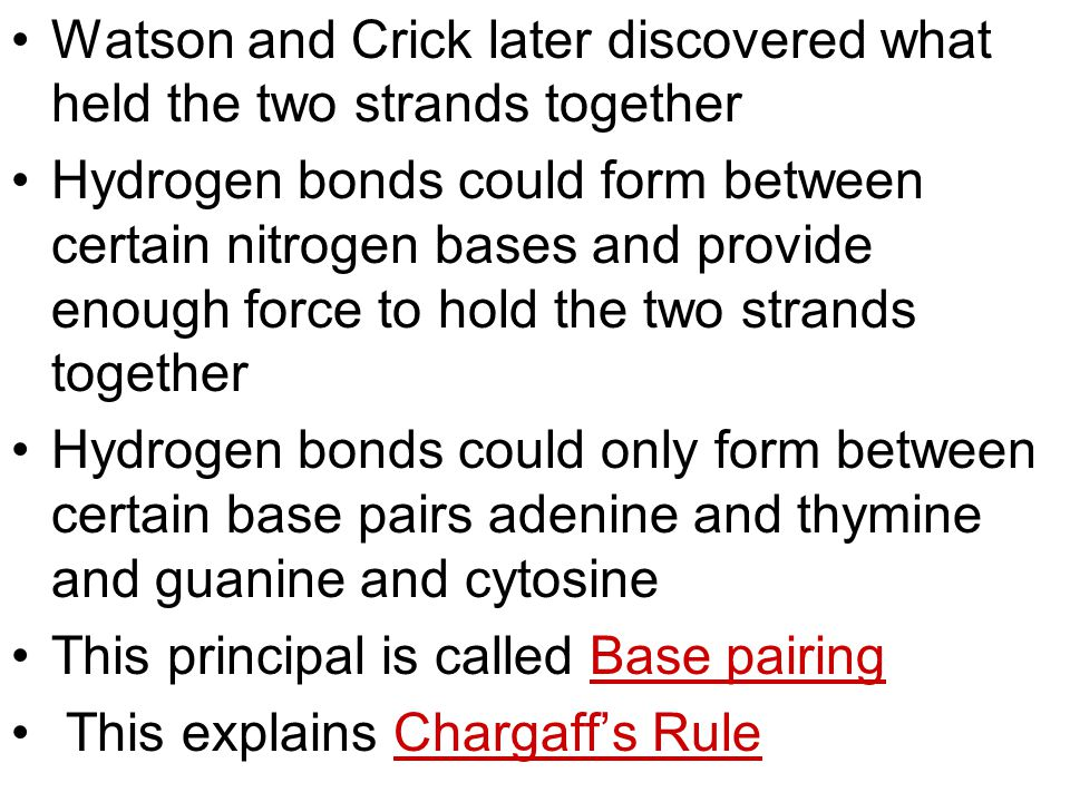 Watson and Crick later discovered what held the two strands together Hydrogen bonds could form between certain nitrogen bases and provide enough force