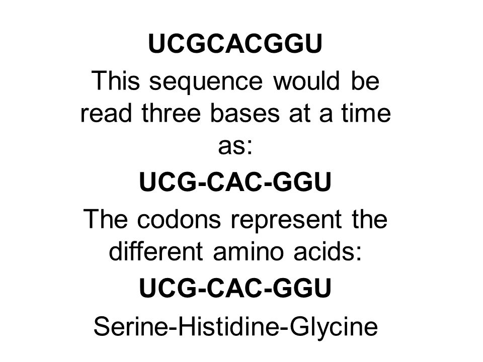 UCGCACGGU This sequence would be read three bases at a time as: UCG-CAC-GGU The codons represent the different amino acids: UCG-CAC-GGU Serine-Histidi