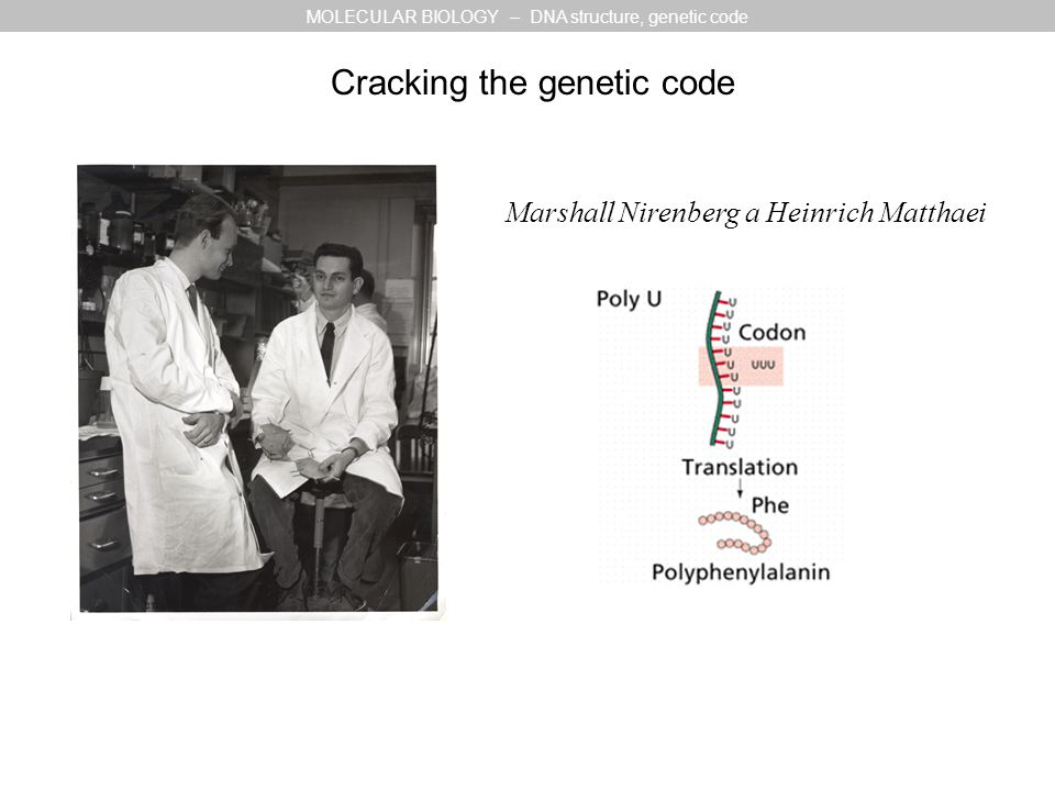 Marshall Nirenberg a Heinrich Matthaei Cracking the genetic code MOLECULAR BIOLOGY – DNA structure, genetic code