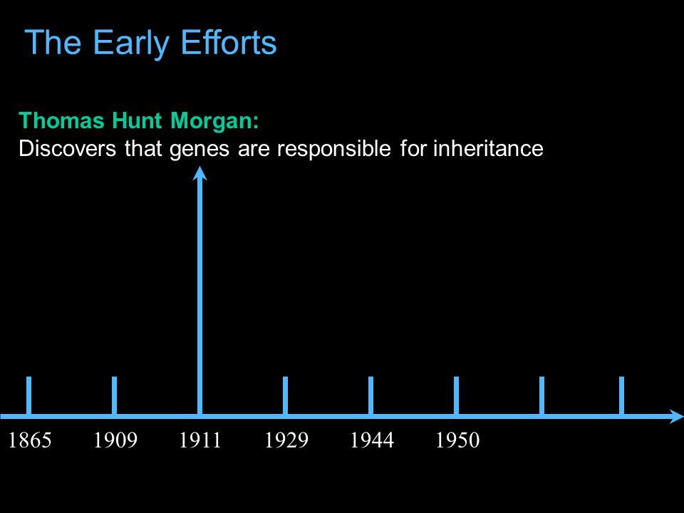 Wilhelm Johannsen: Coins the term Gene 186519091911192919441950 The Early Efforts